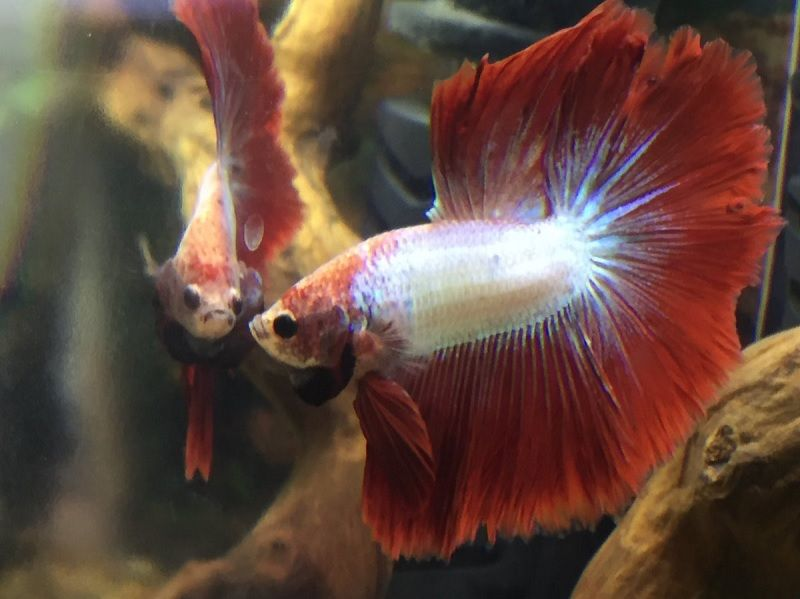 Betta Fish Tank with Filter and Heater