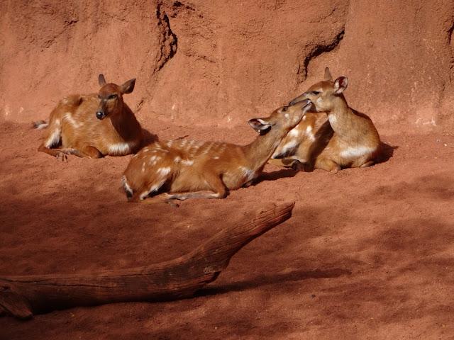 A Trip To The Zoo | Bioparc Fuengirola 10