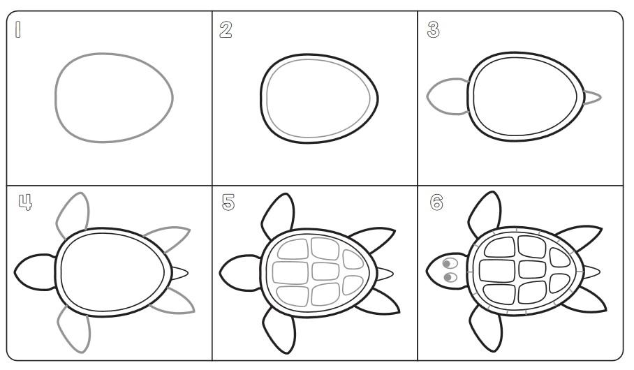 Paraiso Do Educando Desenho Tartaruga