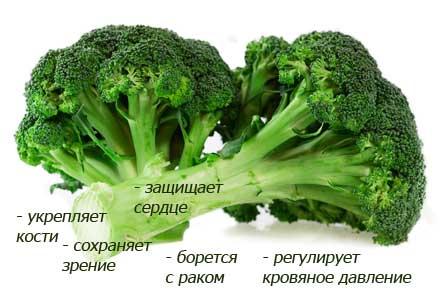капуста брокколи свойства