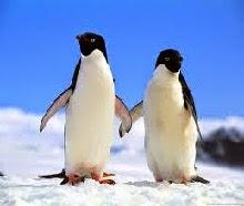 7 Fakta Menarik Seputar Penguin