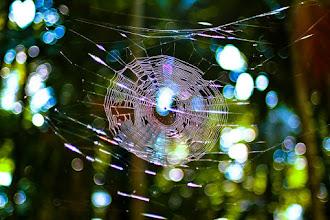 Ämblik ja ämblikuvõrk. Maagia, uskumused, ennustused