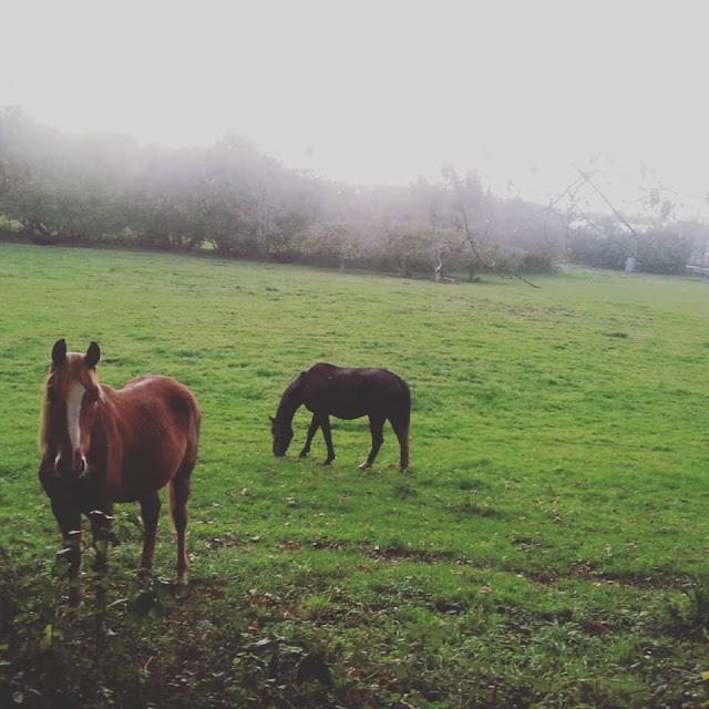 caballos-asturias