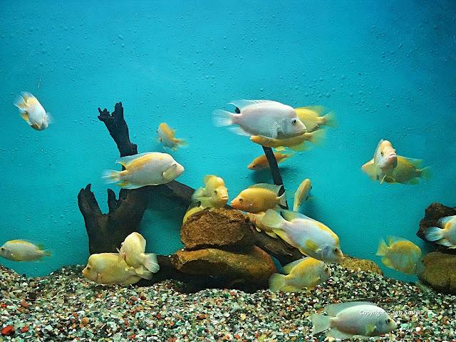 Bangalore Aquarium, Bengaluru