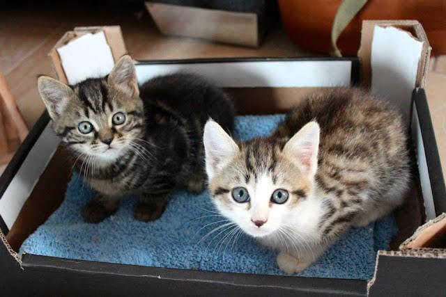 Adopter un chat, les choses à prendre en compte avant de se décider