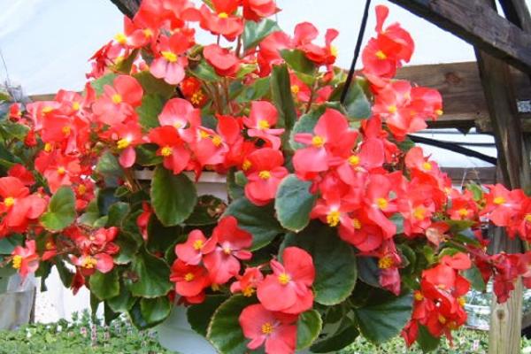 3 Macam Bunga yang Cocok Dibudidayakan di Indonesia