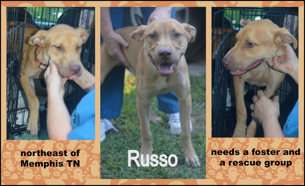 Rescue Dogs Near Memphis Tn