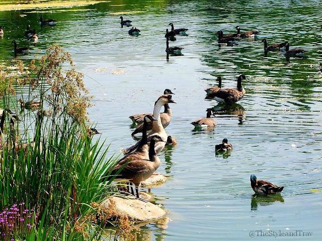 Markham Nature Park Amp