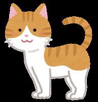猫の模様のイラスト(茶白)