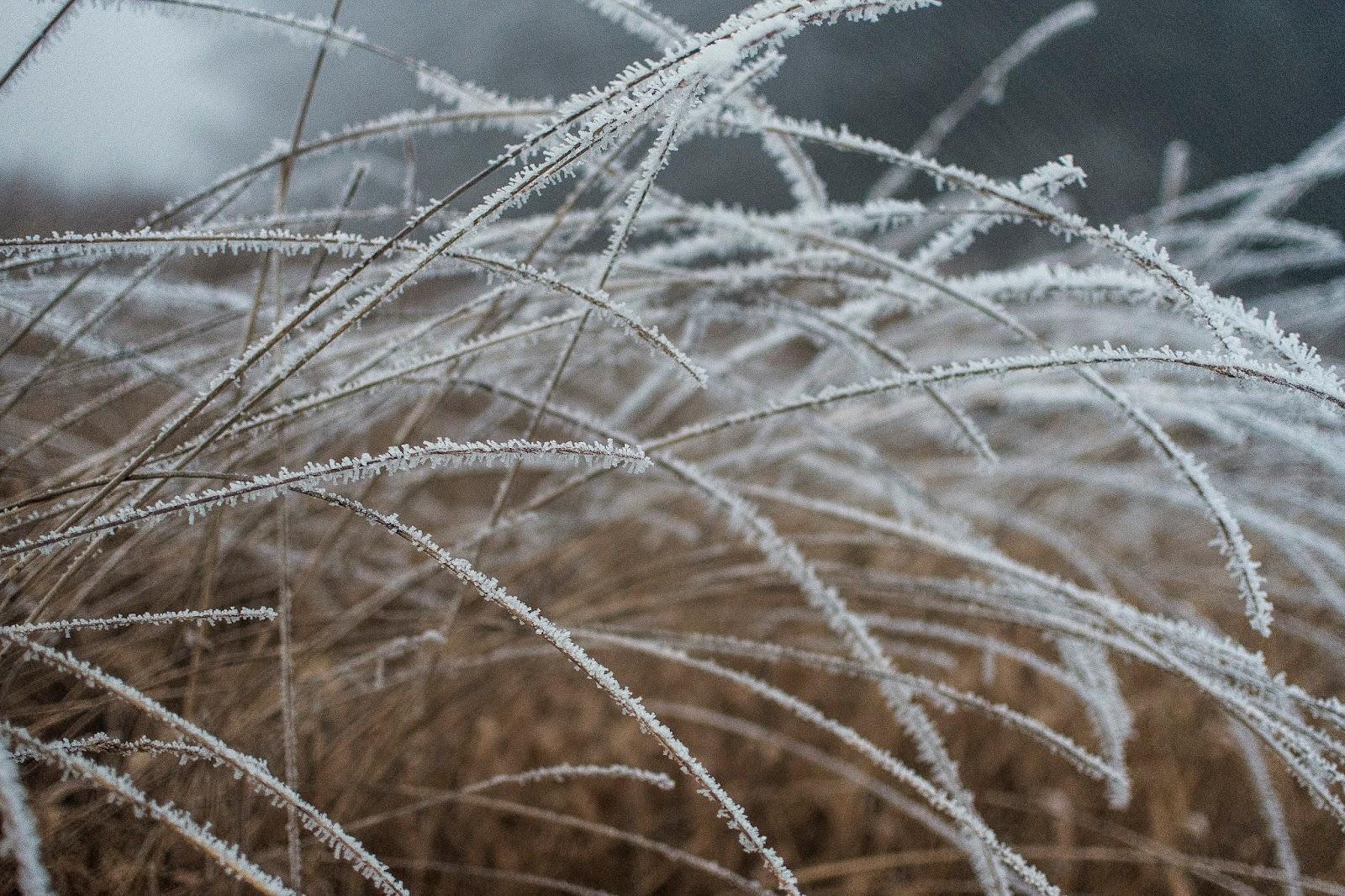 Winter texture 2
