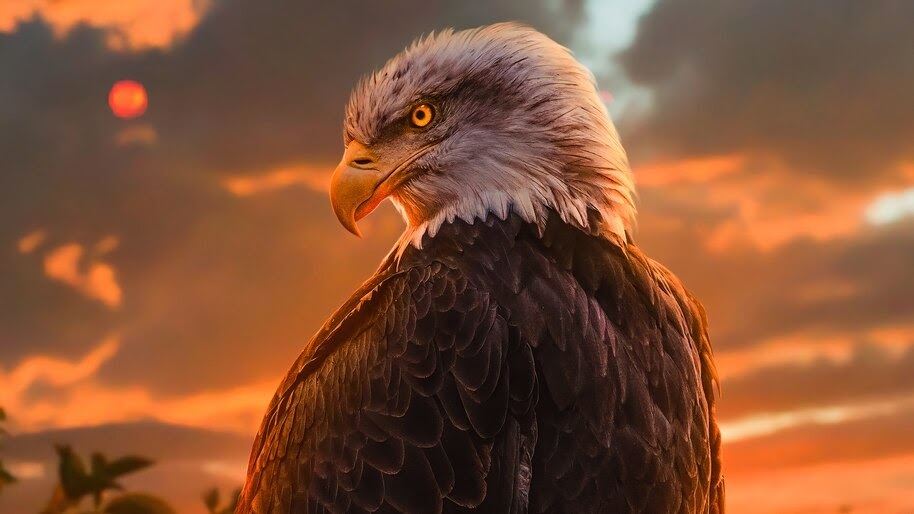 Eagle, Digital Art, 4K, #6.454