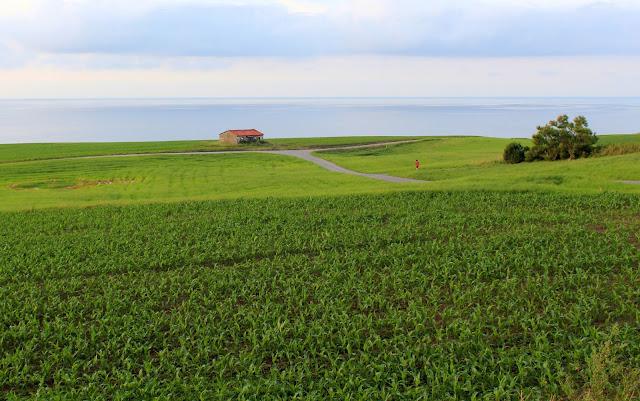 Praderas verdes en el mar. Maizales. Casas en acantilados. Ribamontán del Mar. Playa de Langre