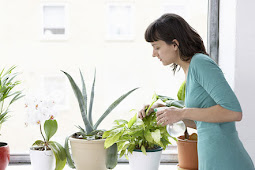 Indoor Kitchen Herb Garden Ideas