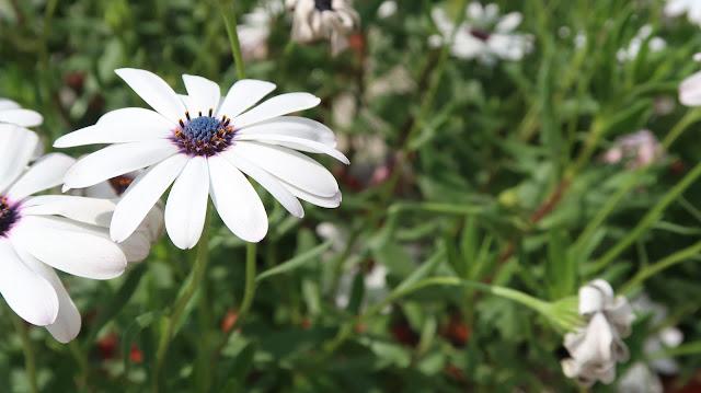 free-flowers-wallpaper-download