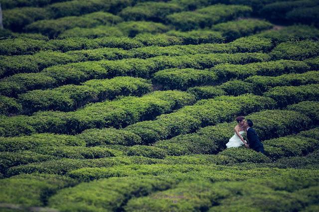 những địa điểm chụp hình cưới đẹp tại đà lạt