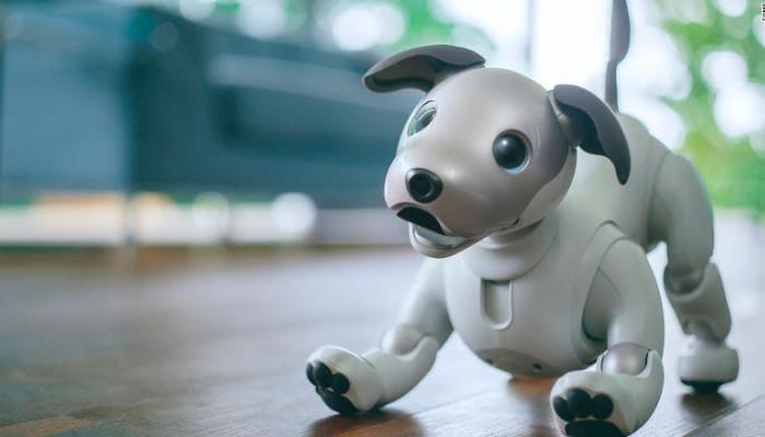 الكلب الأليف إيبو