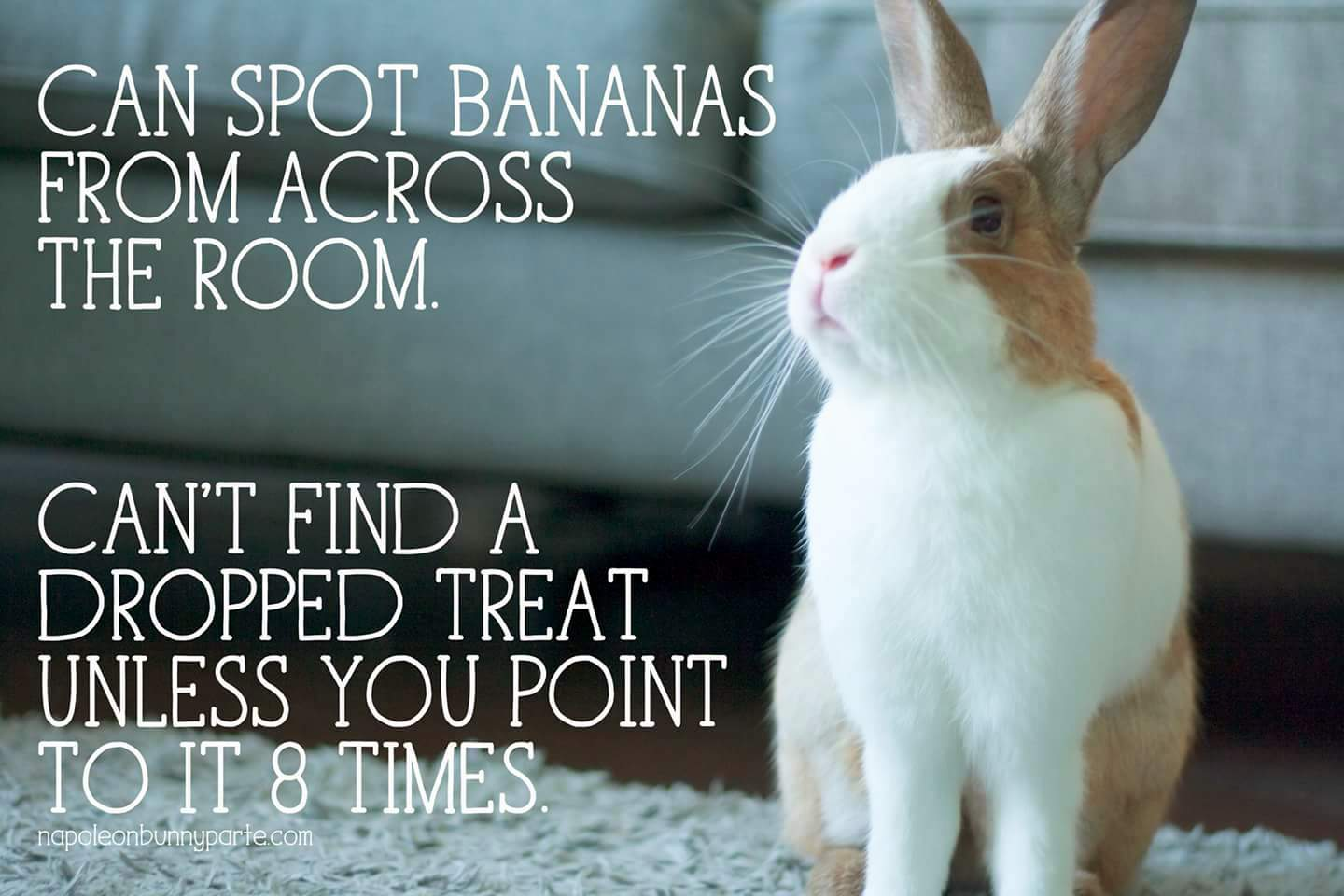 Funny rabbit funny rabbit pictures pictures of rabbits funny - Funny Bunny Monday Meme Day