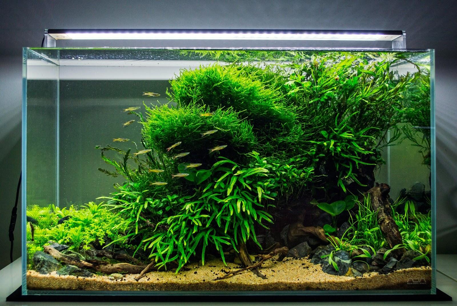 Hồ thủy sinh có cây dương xỉ Trident