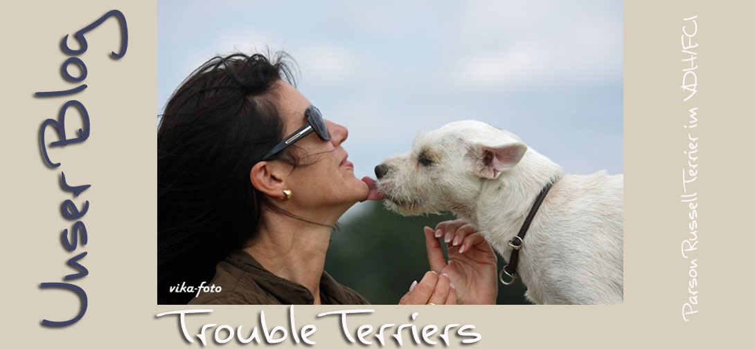 Trouble Terriers Parson Russell Terrier (KFT/ VDH )