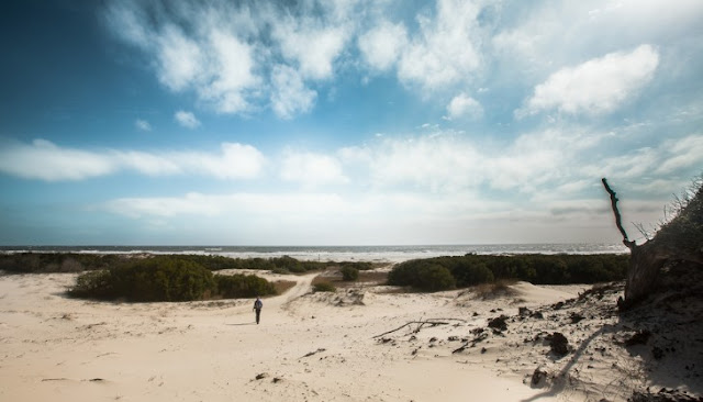 Best Beaches In Georgia You Must Know - Cumberland Island National Seashore