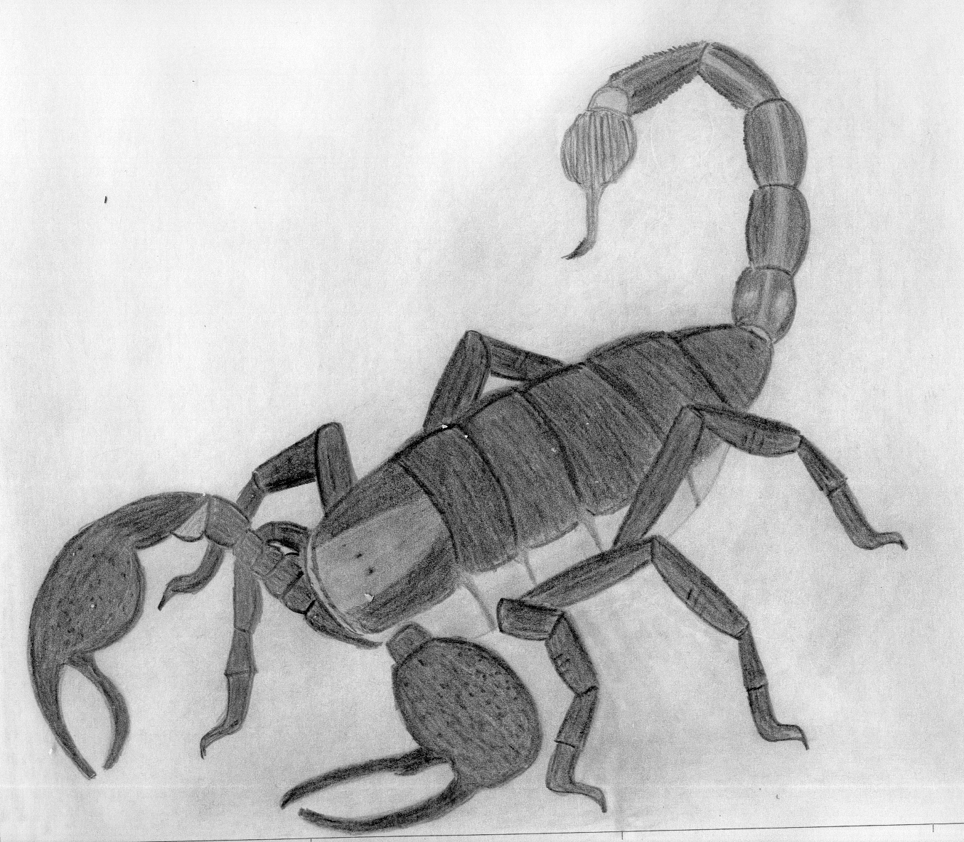Dibujos Gecalse Escorpion