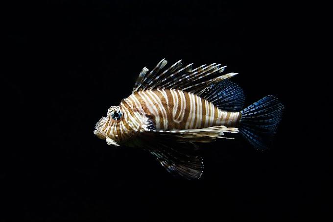 Zoologia | Ciclostomata e Pisces
