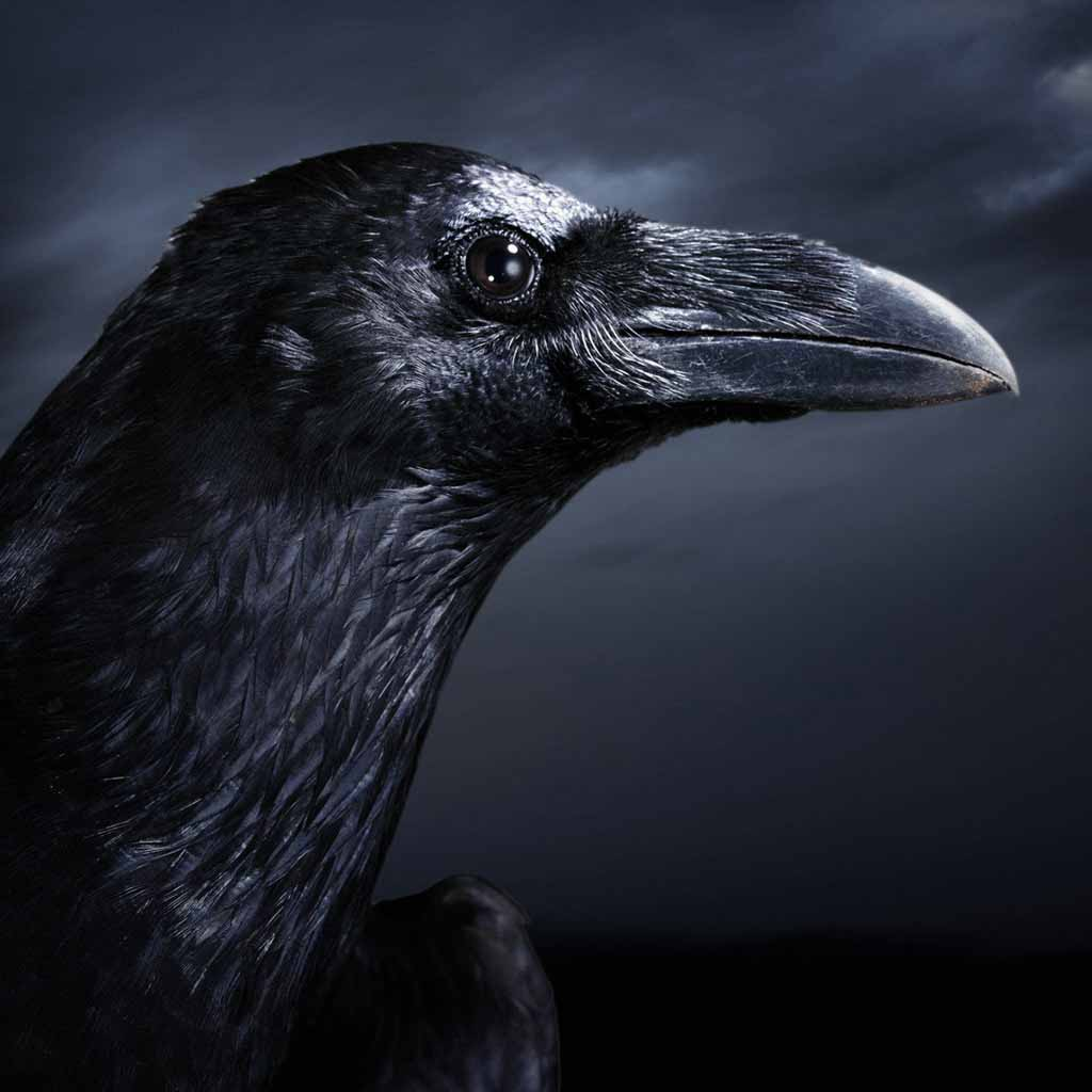 Crow hd wallpapers - The crow wallpaper ...