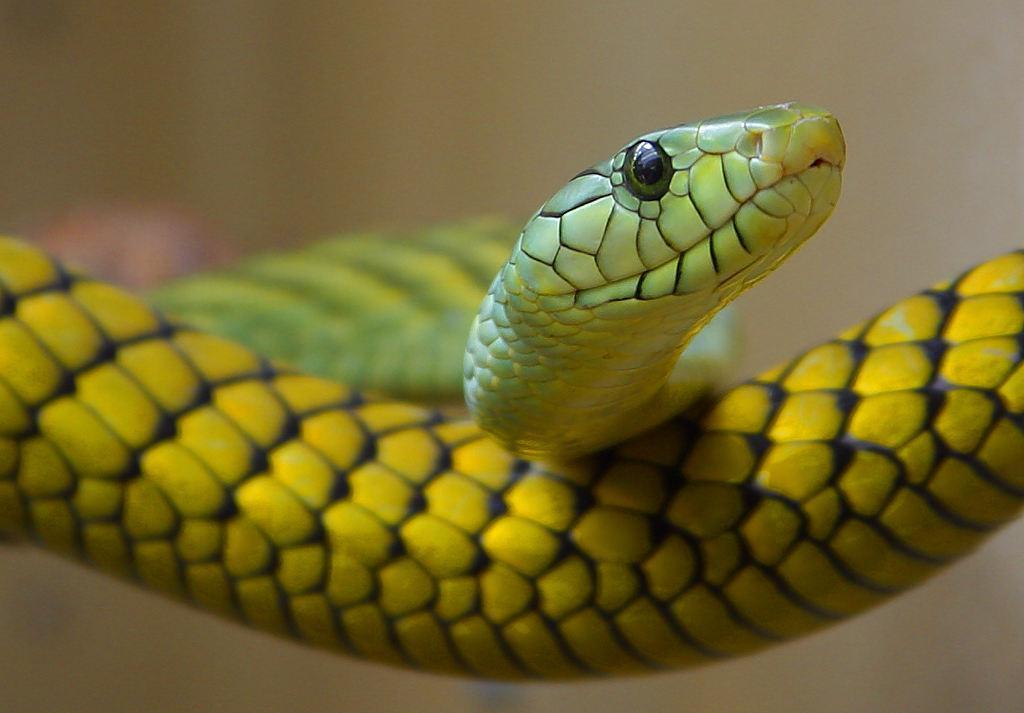 Online Snake