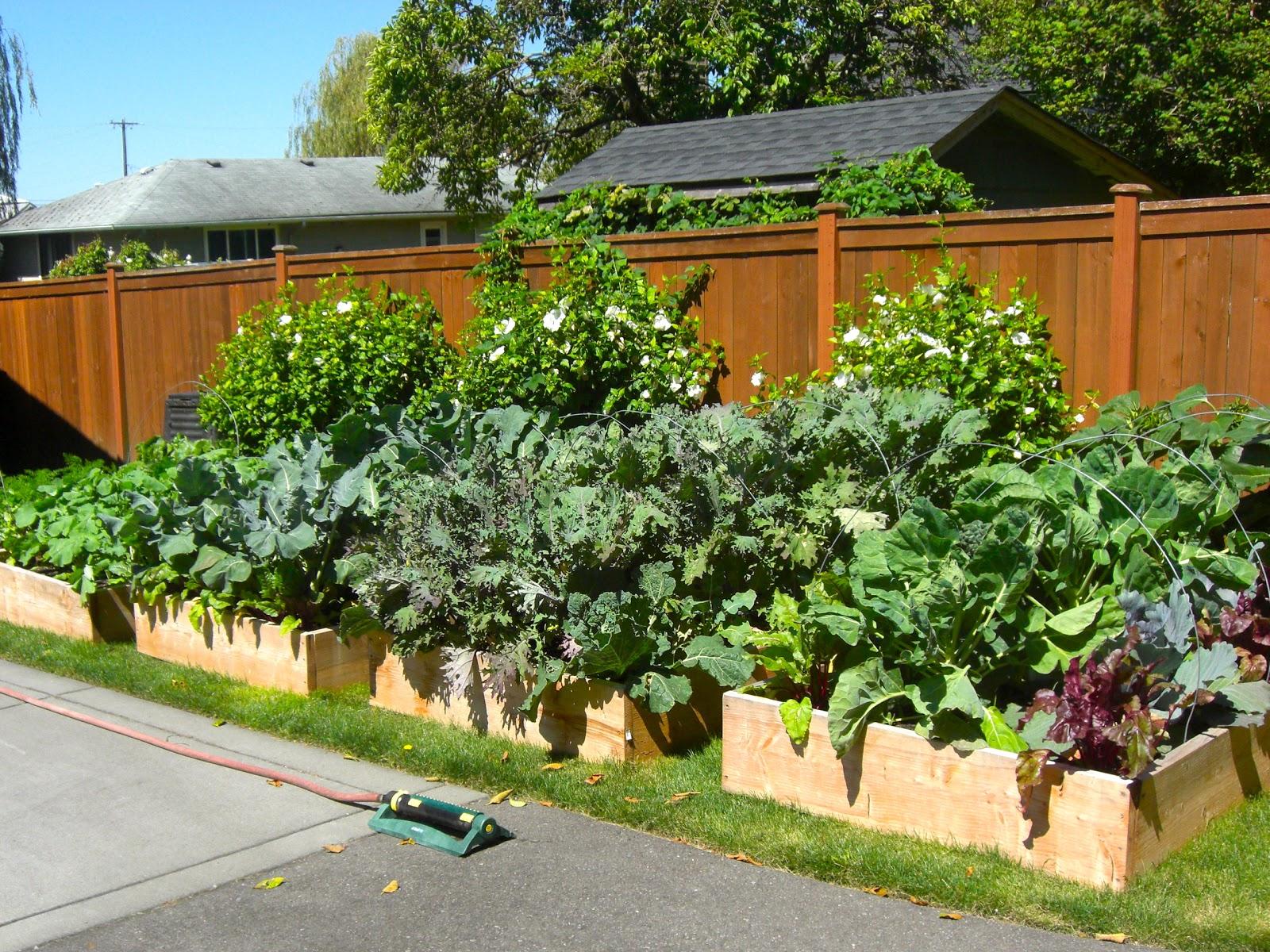 cheap raised beds still grow plants