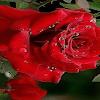 Puisi Cinta Dan Kesetiaan   Puisi Cinta Sejati