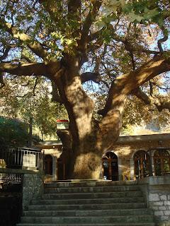 Albania, kyläpuu
