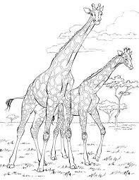 Giraffe Familly Coloring Sheet For Kids