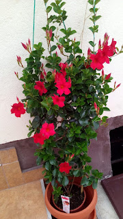 red flowers collection, garden, red garden, red garden theme, red flowers malaysia, red bouquet