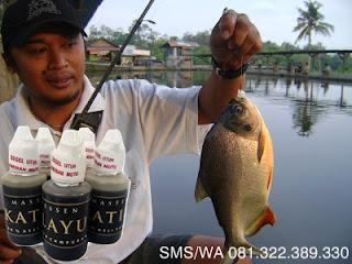 Essen Getah Katilayu Ikan Bawal Harian
