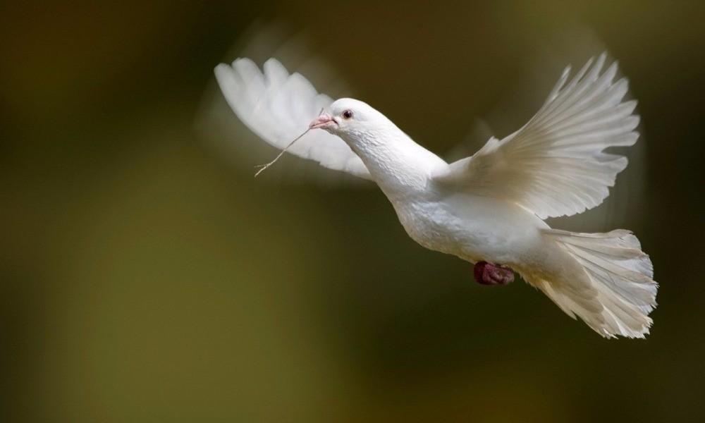 Μεγάλο πουλί χούφτωμα