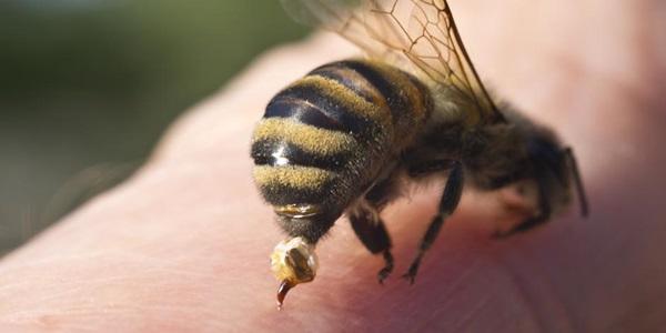 alergija na ose i pčele