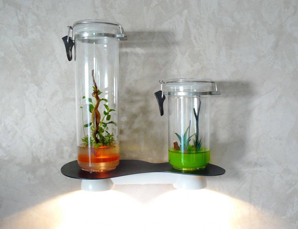 il tait une fois une maman des plantes rares a la maison concours ferm. Black Bedroom Furniture Sets. Home Design Ideas