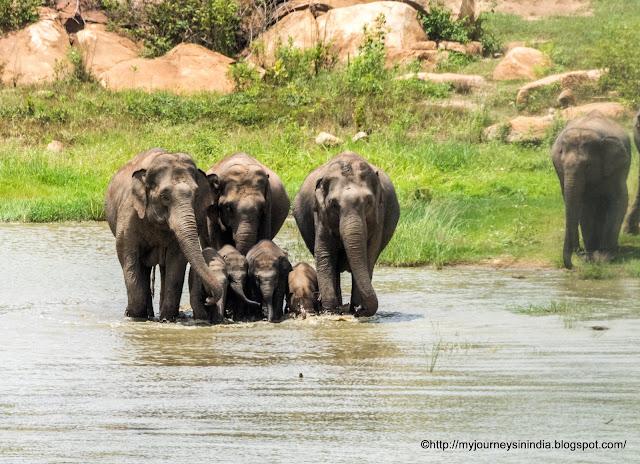 Bannerghatta National Park Safari Bangalore