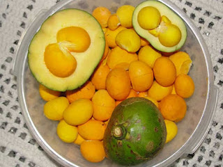 Pequi Fruit Pictures