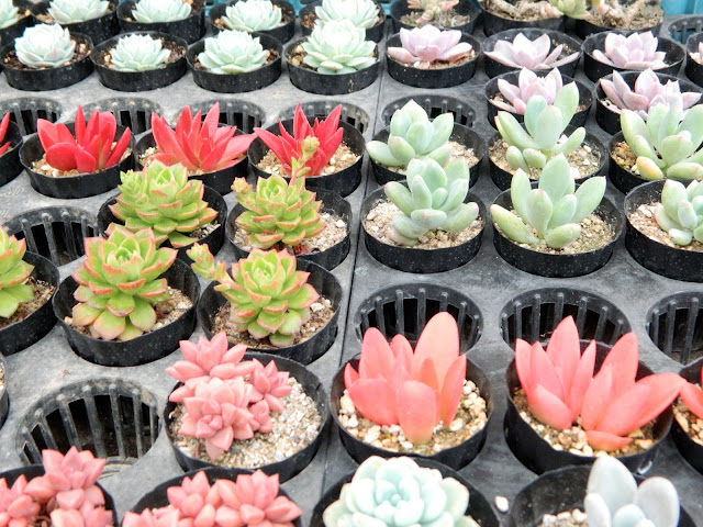 Cactus in different shapes and colors