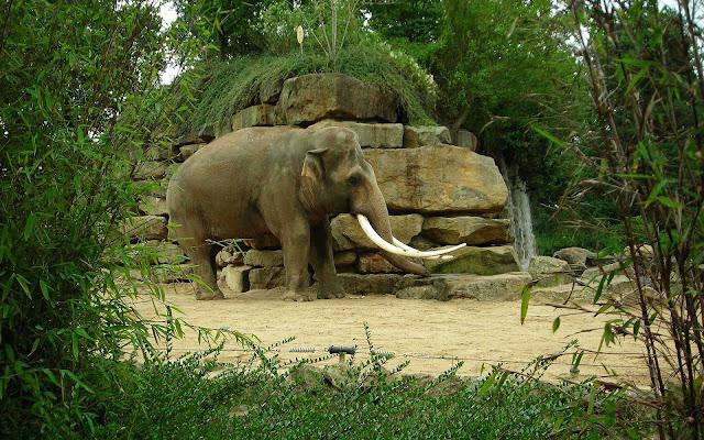Olifant achtergrond dierentuin emmen