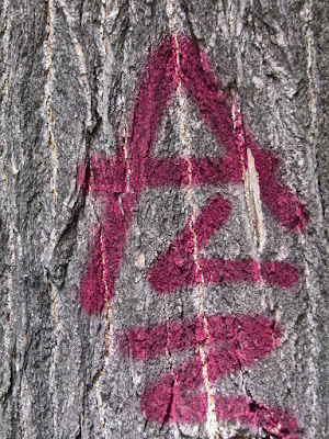 1 Alias 2 Pseudo de A à Z AGNESetlesNUAGES alias AZa ... *) photo @ AZa pixels
