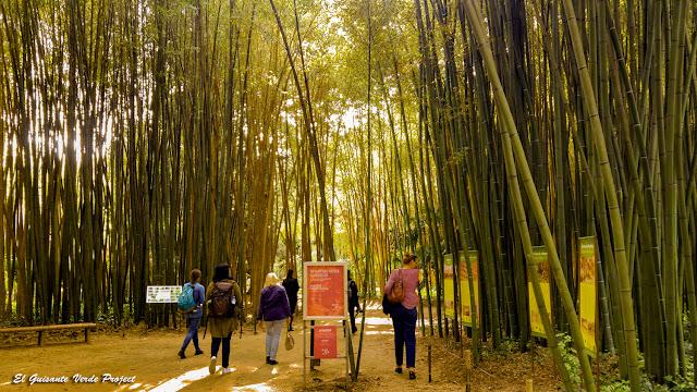 Senderos de la Bambouseraie en Cévennes, Francia por El Guisante Verde Project
