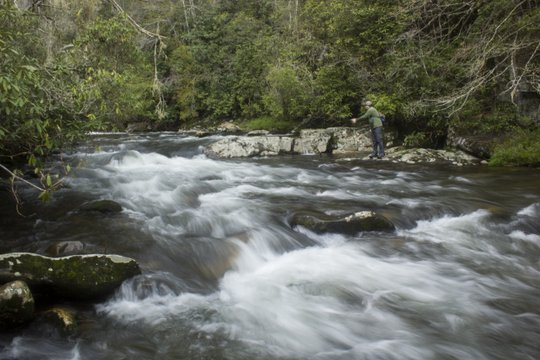 Smokies fly fishing on Deep Creek