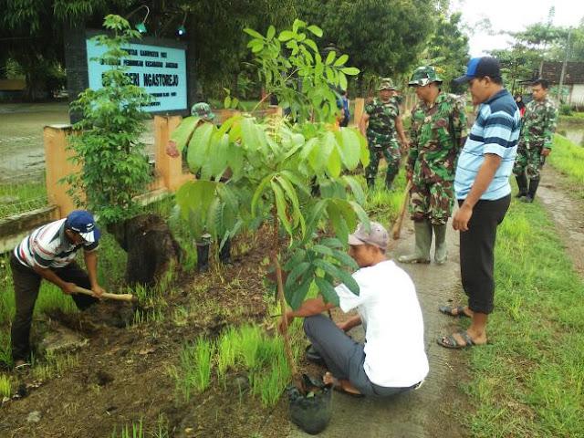 Koramil Jakenan dan Masyarakat Ngastorejo Tanam Pohon Mahoni di Sepanjang Jalan Desa