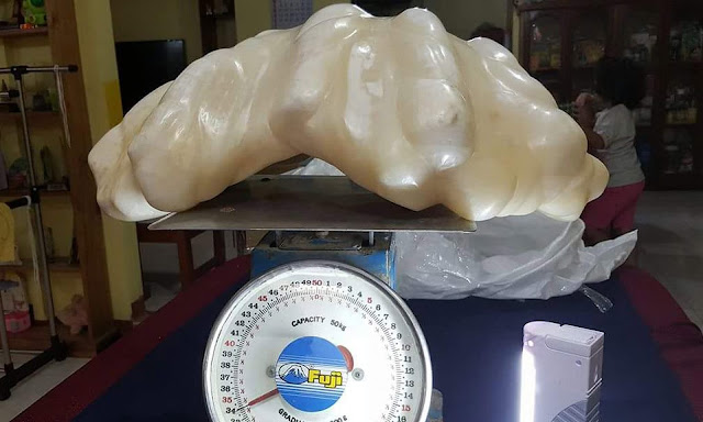 Fisherman Found Giant 34kg Pearl Worth $100million