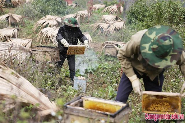Cách nhận biết mật ong bạc hà nguyên chất