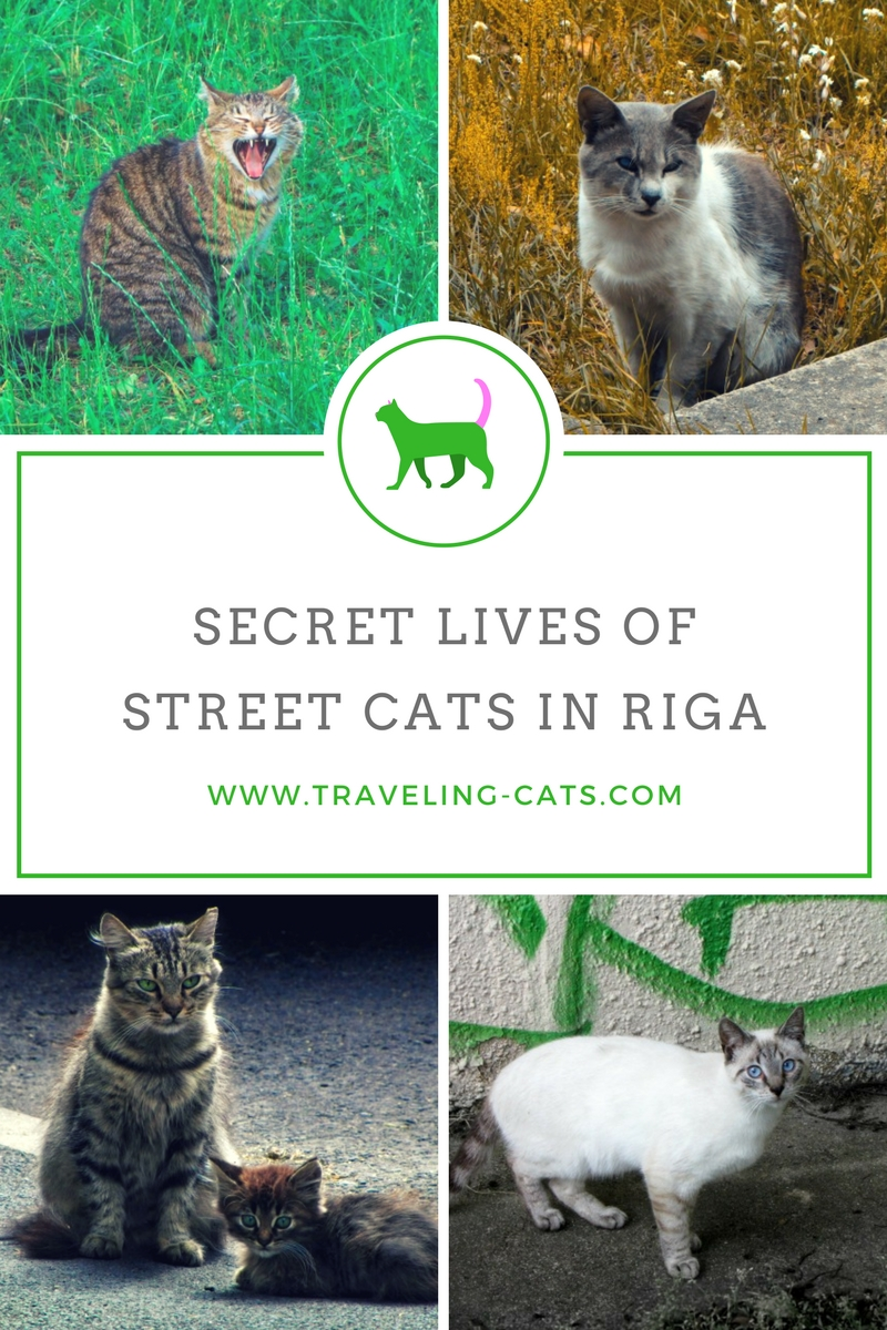 community street cats in riga latvia