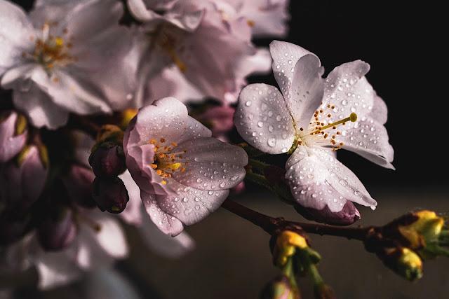 Jak walczyć z wiosennym przesileniem? || badanie ciśnienia krwi ciśnieniomierzami