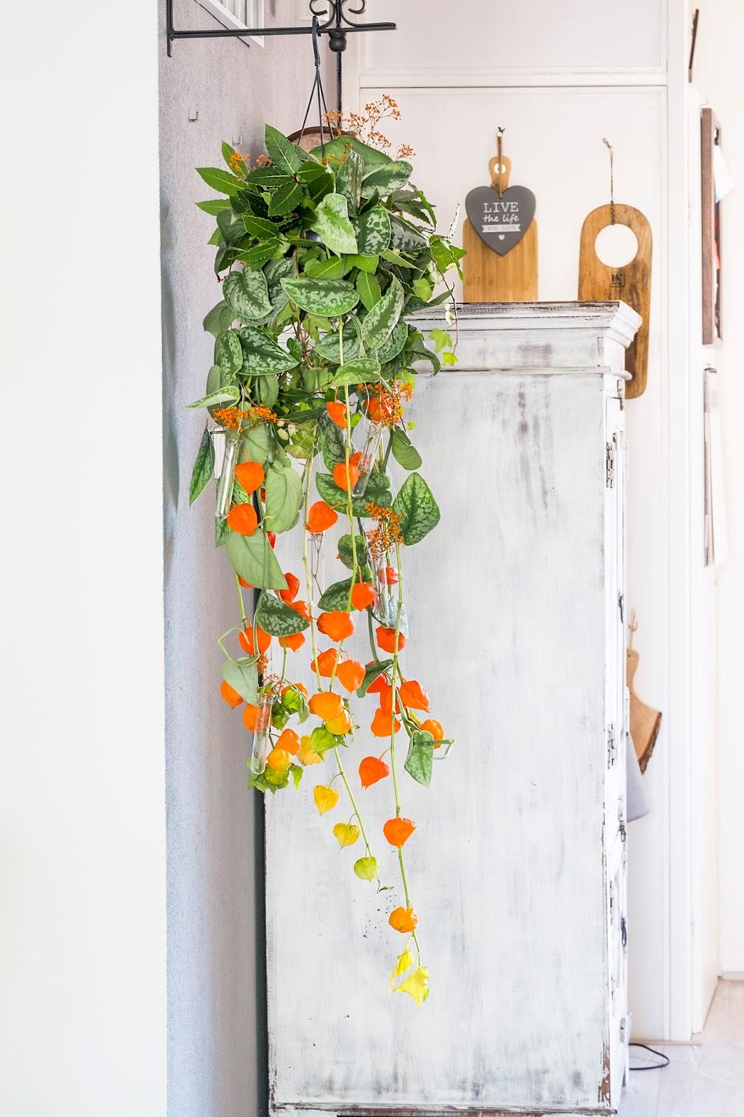Herfst decoratie met plant en physalis (lampionnetjes)